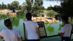 I ragazzi allo zoo